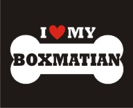 BOXMATIAN- Love Bone Dog Breed Sticker Vinyl Decal Vehicle